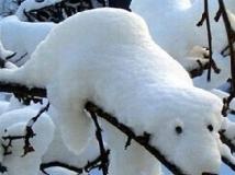 下雪天路上拍到的,哈哈,太可爱了