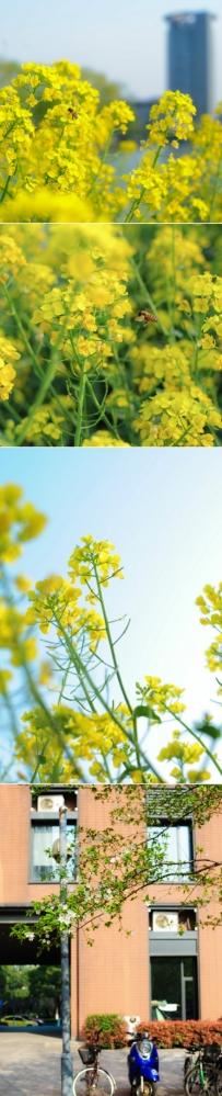 春意浓浓的浙大求是园。(摄影:@三滴水一条巷-ZJU)