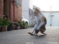 """日本一位摄影师镜头下的功夫大师猫,耳边自动响起了李小龙式""""啊打""""音效,第二张..."""